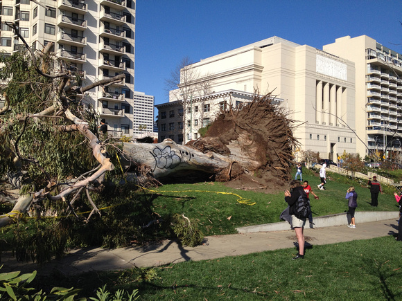 fallen tree at lake merritt